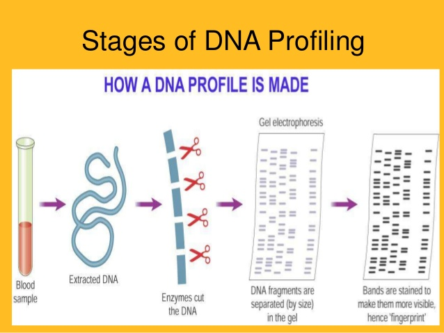 """""""DNA Profiling"""" and """"DNA Technology Bill 2018"""" upsc ias essay"""