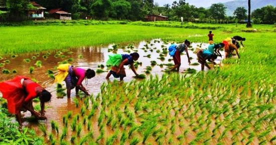 Agriculture Export Policy 2018 – Need, Features and Challenges